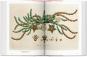 Ein Garten Eden - Meisterwerke der botanischen Illustration. Bild 3