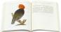 Friedrich Justin Bertuchs Bilderbuch für Kinder. Das illustrierte Wissen des 18. Jahrhunderts. Bild 3