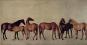 George Stubbs 1724-1806. Die Schönheit der Tiere. Von der Wissenschaft zur Kunst. Bild 3