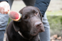Hundebürste für die perfekte Fellpflege. Bild 3