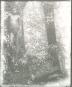 Moving Images. Anthropologische Feldforschung und Fotografie auf Malakula seit 1914. Bild 3
