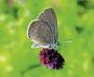 NaturGenies. Die verblüffenden Tricks der Pflanzen und Tiere. Bild 3