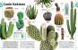 Pflanzen. Bäume, Blumen und Gräser in über 1000 Bildern. Bild 3