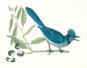 Vögel. Geschichte und Meisterwerke der Vogelillustration. Schätze aus der Bibliothek des Natural History Museum London. Bild 3