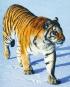 Wanderer der Wildnis - Eine Reise zu den letzten Nomaden der Tierwelt Bild 3