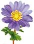 Zwiebelblumen. Historische Sorten. Bild 3