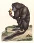 Alexander von Humboldt. Tierleben. Bild 4