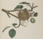 Amerikas anderer Audubon. America's Other Audubon. Bild 4