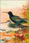 Bunte Vögel aus aller Welt - Limitierte und numerierte Sonderedition auf 300 Exemplare - Nachdruck der Originalausgabe Bild 4