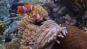 Das Korallendreieck - Das größte Geheimnis der Natur DVD Bild 4