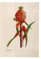 Die Bildgeschichte der Botanik. Pflanzendarstellungen des 15.-18. Jahrhunderts aus der Sammlung Christoph Jacob Trew. Bild 4