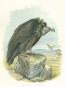 Die Raubvögel Deutschlands und des angrenzenden Mitteleuropas. Bild 4