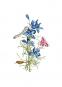Maria Sibylla Merian. Der Raupen wundersame Verwandelung und sonderbare Blumennahrung. 2 Bände. Bild 4