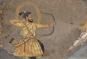 Sultans of Deccan India 1500-1700. Die Sultane des Dekkan. Reichtum und Fantasie. Bild 4