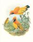Vögel. Geschichte und Meisterwerke der Vogelillustration. Schätze aus der Bibliothek des Natural History Museum London. Bild 4