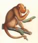 Alexander von Humboldt. Tierleben. Bild 5