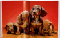Walter Chandoha. Dogs. Photographs 1941-1991. Bild 5