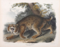John J. Audubon. Die Säugetiere Nordamerikas. Bild 5