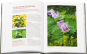 Staudenraritäten. Gartenjuwelen kultivieren und sammeln. Bild 5