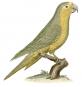 Vorstellung der Vögel Deutschlandes und beyläuffig auch einiger Fremden, nach ihren Eigenschaften beschrieben - Bibliophiler Neudruck der Ausgabe von 1763 bei Friedrich Wilhelm Birnstiel (Berlin) Bild 5