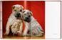 Walter Chandoha. Dogs. Photographs 1941-1991. Bild 6