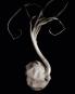 Edward Weston. One Hundred Twenty-Five Photographs. Bild 6