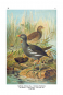 Vorstellung der Vögel Deutschlandes und beyläuffig auch einiger Fremden, nach ihren Eigenschaften beschrieben - Bibliophiler Neudruck der Ausgabe von 1763 bei Friedrich Wilhelm Birnstiel (Berlin) Bild 6