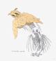 William Crutchfield. »Owl Feathers«, 1970. Bild 6