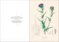 Alexander von Humboldt und die botanische Erforschung Amerikas. Bild 7