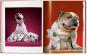Walter Chandoha. Dogs. Photographs 1941-1991. Bild 7