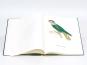 Christian Ludwig Brehm. Monographie der Papageien. Bild 7