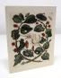 Grußkartenbox »Maria Sibylla Merian«. Bild 7