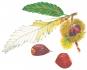 Henry David Thoreau. Wilde Früchte. Prachtausgabe. Bild 7