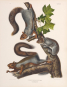 John J. Audubon. Die Säugetiere Nordamerikas. Bild 7
