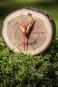 Uhr aus Baumscheibe »Tischuhr Baumscheibe«. Bild 7