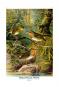 Vorstellung der Vögel Deutschlandes und beyläuffig auch einiger Fremden, nach ihren Eigenschaften beschrieben - Bibliophiler Neudruck der Ausgabe von 1763 bei Friedrich Wilhelm Birnstiel (Berlin) Bild 7